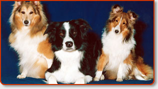 Pet Sitting Services In Orange County, CA., & Los Angeles Metro Areas