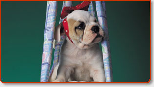 Dog Kennels And Pet Friendly Boarding Facilities In Orange County, Los Angeles + USA
