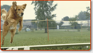 Dog Clubs & Kennel Clubs In Orange County Los Angeles County San Diego County Riverside County