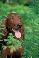 Poop Free Lawns Dog Waste Cleaning Services For Homeowners