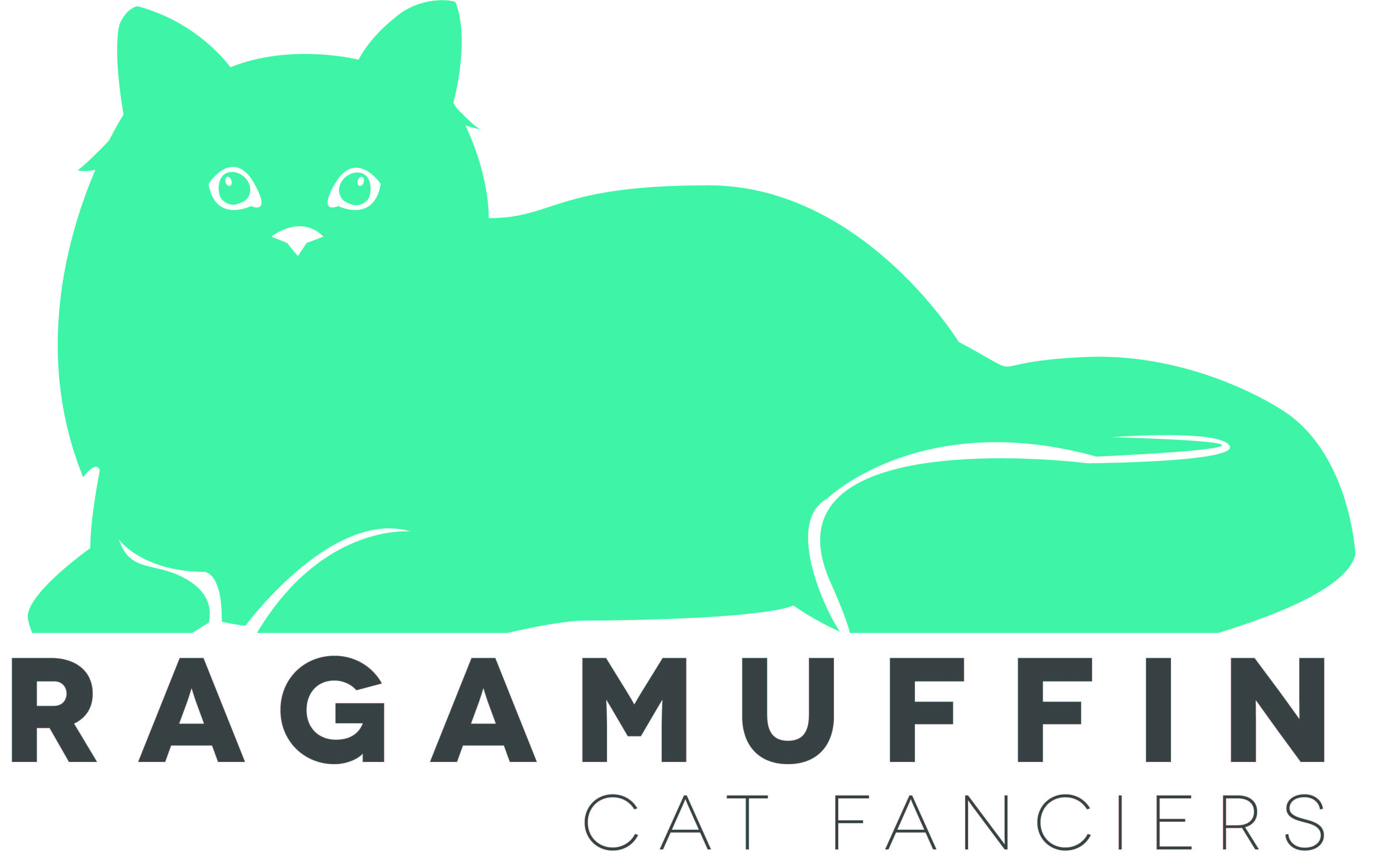 Ragamuffin Cat Breeders Directory: Ragamuffin Cats For Sale