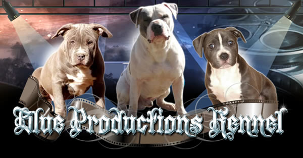 Blue Productions Kennel- Specializing In XL & XXL Blue