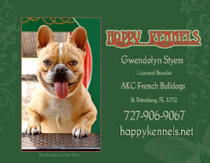 French Bulldogs Puppies For Sale In St Petersburg